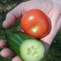 Kurkku ja tomaatti.
