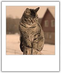 Kissa istuu aidalla.