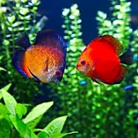 Akvaariokalat