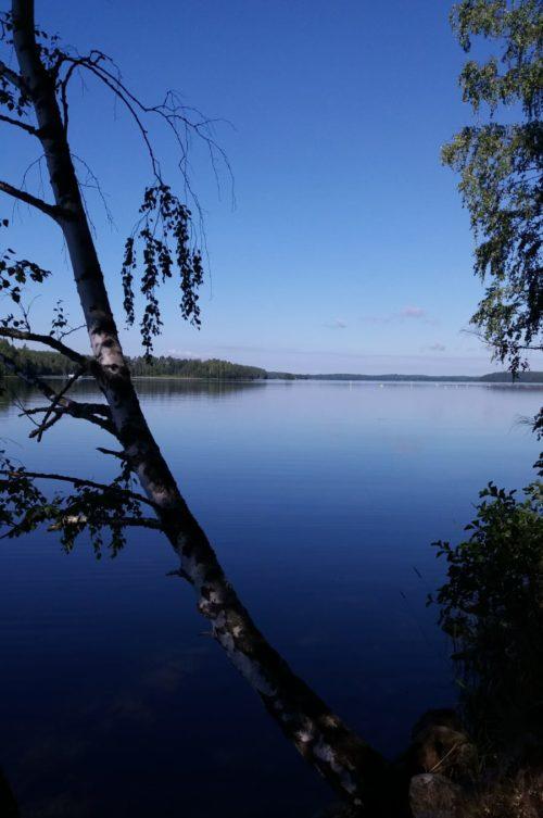 Koivu ja järvenranta.