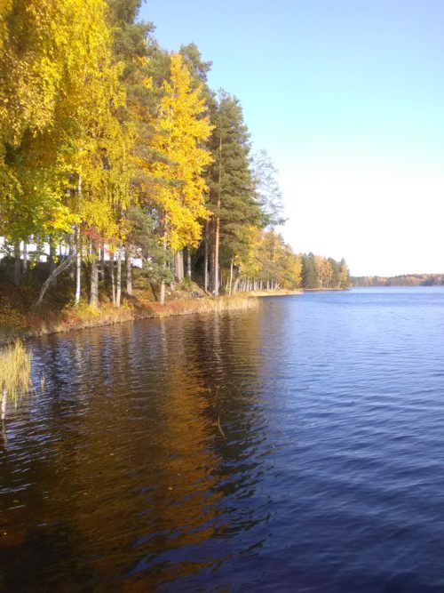 Rannassa puita auringossa ja ruskan väreissä.