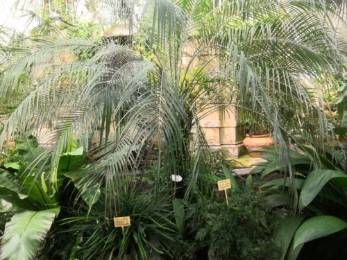 Palmu ja erilaisia viherkasveja.