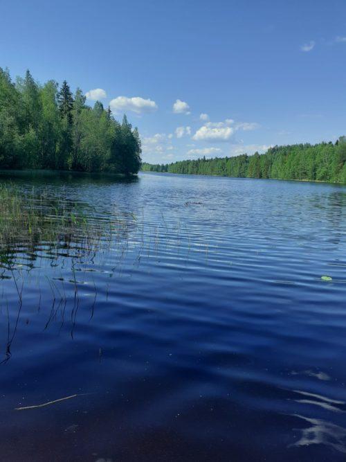 Kesäinen järvi ja metsää.