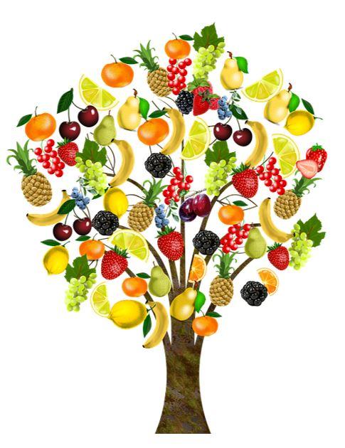 Tässä kuvassa on puu, jossa on monenlaisia hedelmiä