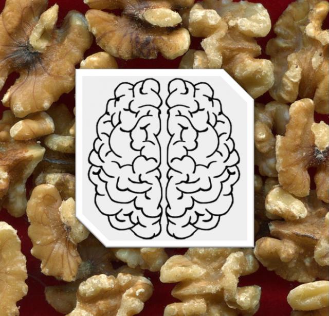 kuva saksanpähkinöistä